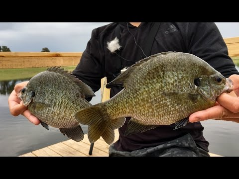 MONSTER SUNFISH!!! Getting HYPED while Bluegill Fishing (ft. Jon B. & apbassing)