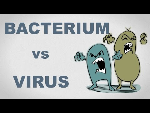 Viruses and Bacteria: What's the difference and who cares anyway? - Plain and Simple