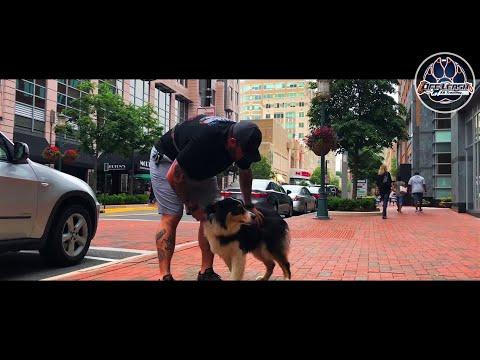 Aussie Hank   Owner Testimonial   Off Leash Obedience   Nova Dog Trainers