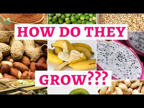 DID YOU KNOW HOW THESE FOODS GROW???
