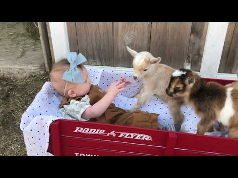 Baby Max: Goat Farmer in Training