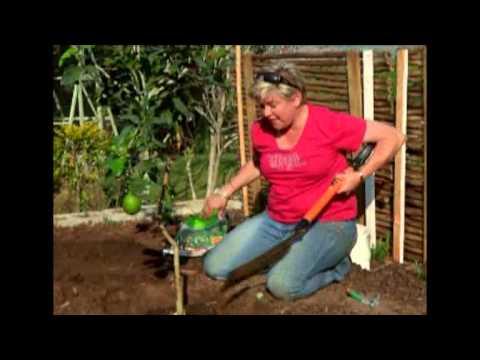 The Gardener Magazine: Planting A Lemon Tree