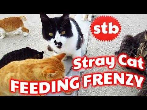 Stray Cat Feeding Frenzy in Japan ★ SoloTravelBlog