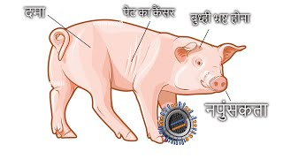 why muslim DONT EAT PORK ? MUST WATCH