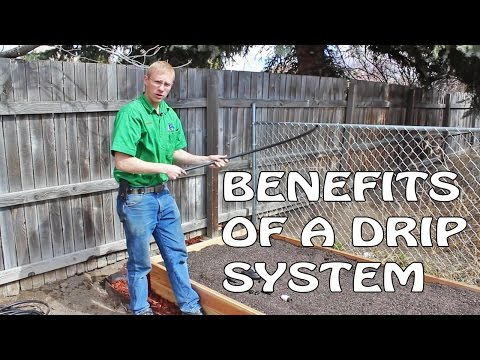 Using A Drip System