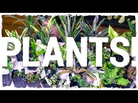 HUGE Terrarium & Vivarium Plant Unboxing