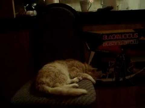 MY CAT HAS INCESSANT NIGHT TERRORS