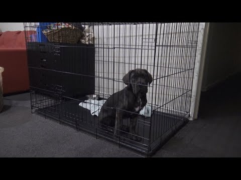 Stop puppy cry at night in crate - Day 15 (Fully Trained)