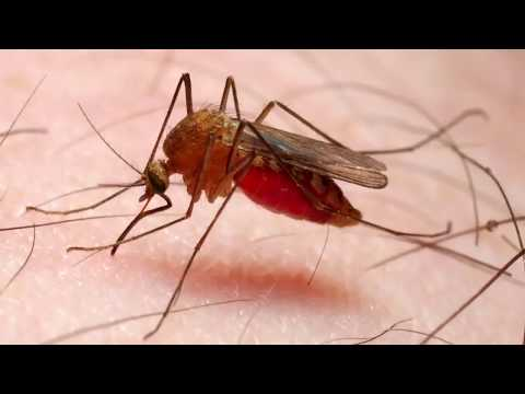 5 Remedies To Get Rid Of Malaria