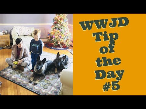 What Would Jeff Do? Dog Training Tip of the Day #5
