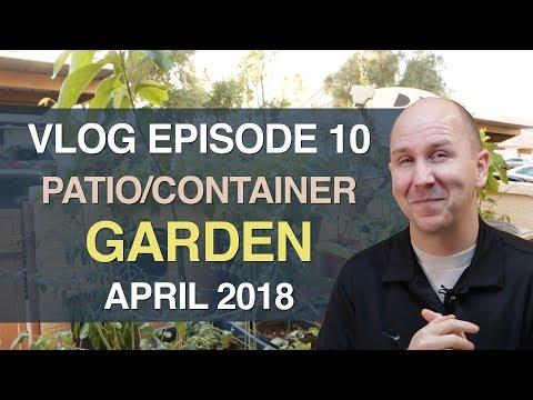 Patio Container Garden Update April 2018 | vlog episode 10