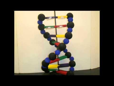 Making a Model DNA