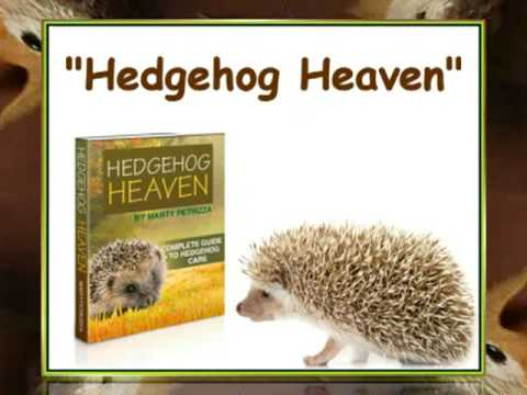 Hedgehog Care Expert