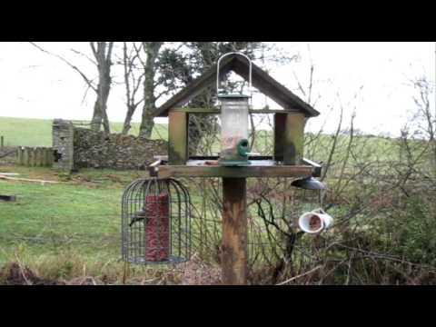 The Bird Table / January
