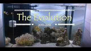 The Evolution Of The Reef Tank