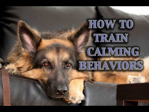 How To Train Calmness In Dogs (Part II)