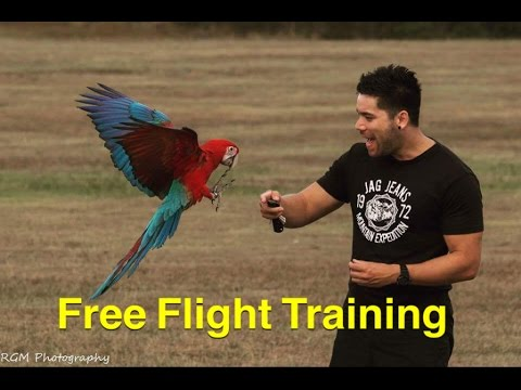 Training your Parrot to Free Fly