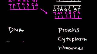 DNA replication & transcription