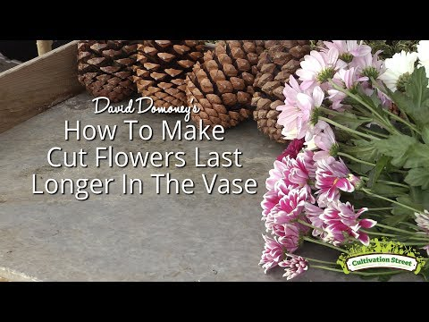 How to make cut flowers last longer in the vase