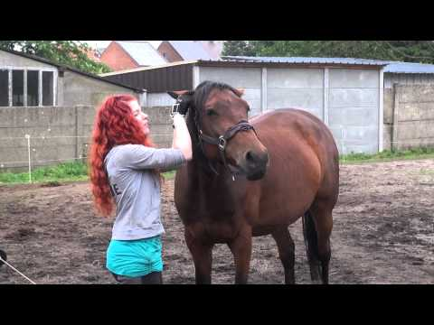 What happens when you put your finger in your horse's ear?