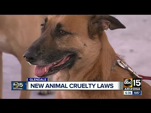 New laws in effect for Glendale pet owners