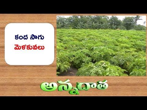 Cultivation Tips of Kanda Yam || ETV Annadata