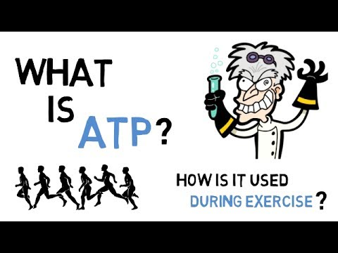 What Is ATP & How Does ATP Work During Exercise?