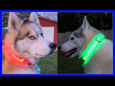 HUSKIES THAT GLOW IN THE DARK | LED Dog Collars