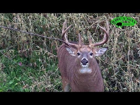 November 2 Self-Filmed Illinois Whitetail Deer Hunt - Rattle & Decoy Rutting Bucks