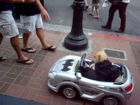 San Diego Comic Con 2013-Dog Driving a Batmobile