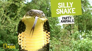 Silly Snake feat. Parry Gripp (Music Video) 🐍 | PARTY ANIMALS PLAYLIST