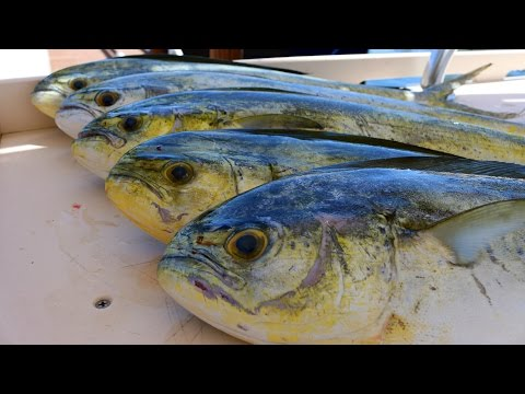 Fish So NICE They Named it Twice!  Mahi-Mahi (Dorado)-  Catch, Clean and Cook!!!