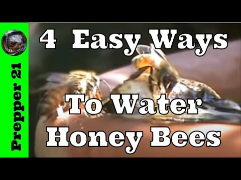 Four Easy Ways To Water Honey Bees