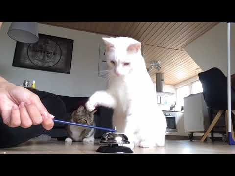 Clickertraining deaf cats to ring a bell