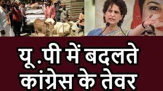 up congress on road priyanka gandhi the main key factor for revival of congress