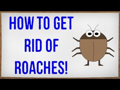 How to Get Rid of Roaches Fast | Getting Rid of Cockroaches in your House without an Exterminator