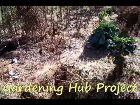 Garden Hub Channel Experiment