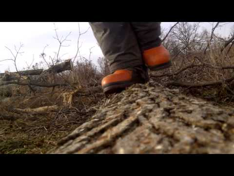 Limbing and bucking a white oak