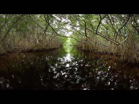 Gulf Guardian Award: 1st Place Bi-National – Mangrove Restoration in Key Mexican Coastal Lagoons