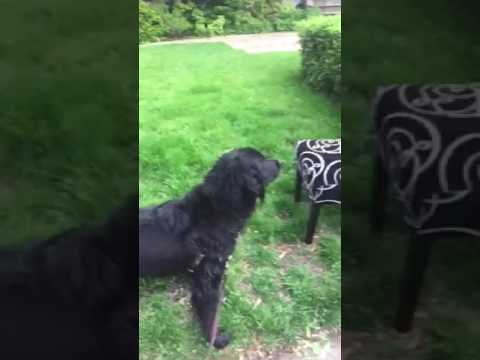 Dog hates ugly chair