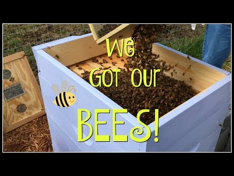 We Got Our BEES!