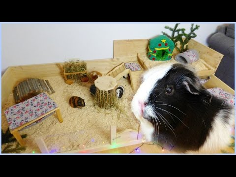 Guinea Pig Cage Cleaning Routine