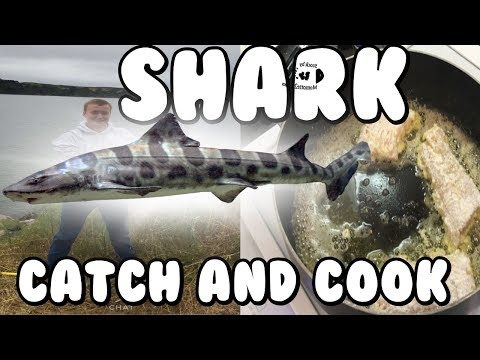 LEOPARD SHARK CATCH AND COOK! (Leopard Shark Fishing and Eating)