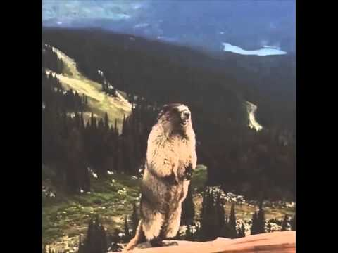 Screaming Marmot Bradberry