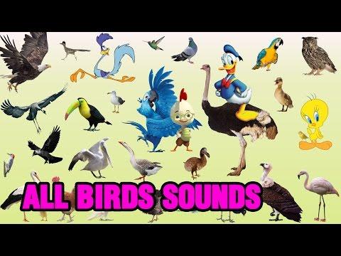 Birds sounds    Sounds of birds    colorsofvideos