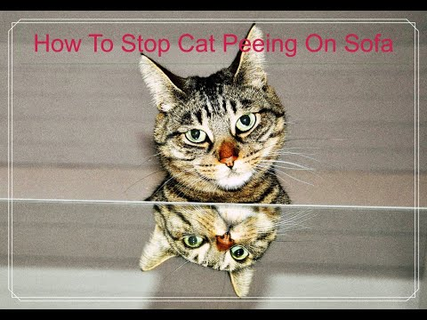 How To Stop Cat Peeing On Sofa