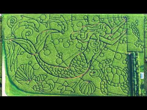 How I design the Treinen Farm Corn Maze Part One.mp4