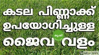 കടല പിണ്ണാക്ക് (കപ്പലണ്ടി) ഉപയോഗിച്ചുള്ള ജൈവ വളം - kadala pinnakku valam