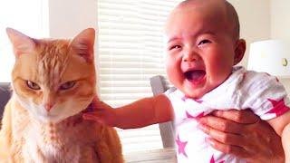 Baby mit Katze lustige und niedliche Momente - Baby und Haustiere Video