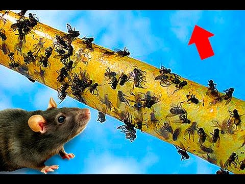 How To BUILD a Mouse Trap in 30 seconds 🔴 Tutorial